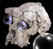 7 million year old skull